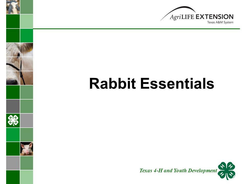 Rabbit Essentials Texas 4-H and Youth Development