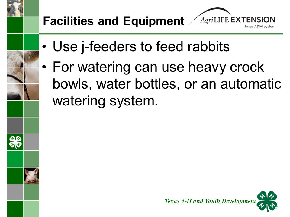 Facilities and Equipment Use j-feeders to feed rabbits For watering can use heavy crock bowls, water bottles, or an automatic watering system.