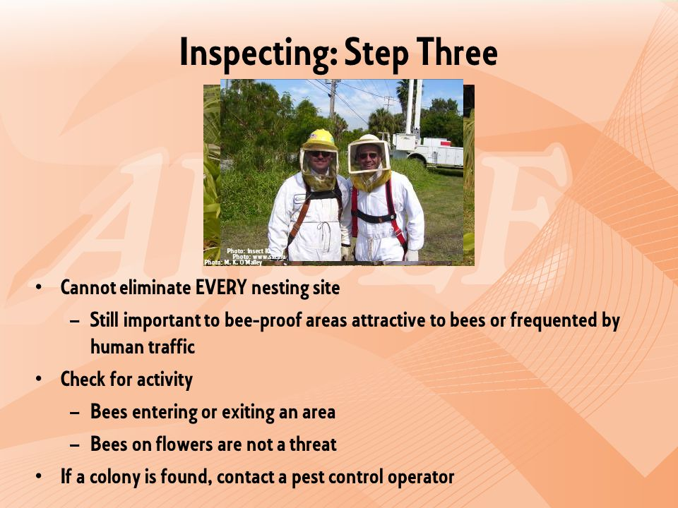 Inspecting: Step Three Cannot eliminate EVERY nesting site – Still important to bee-proof areas attractive to bees or frequented by human traffic Check for activity – Bees entering or exiting an area – Bees on flowers are not a threat If a colony is found, contact a pest control operator Photo: M.