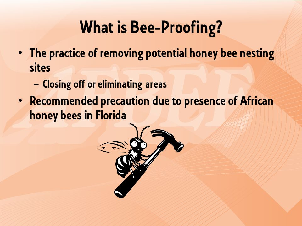 What is Bee-Proofing.