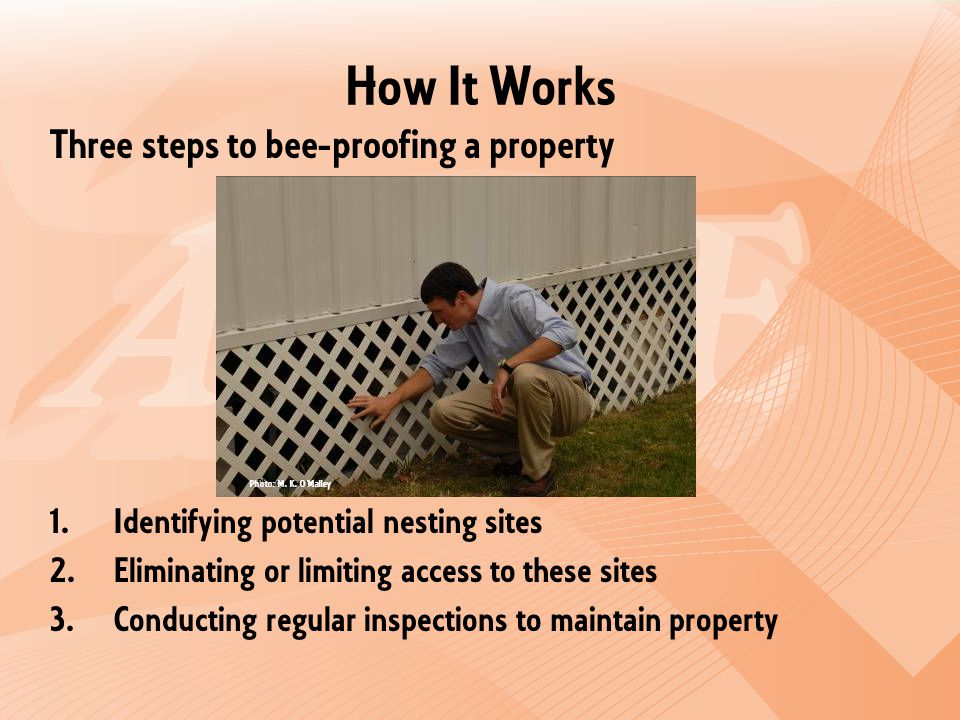 How It Works Three steps to bee-proofing a property 1.