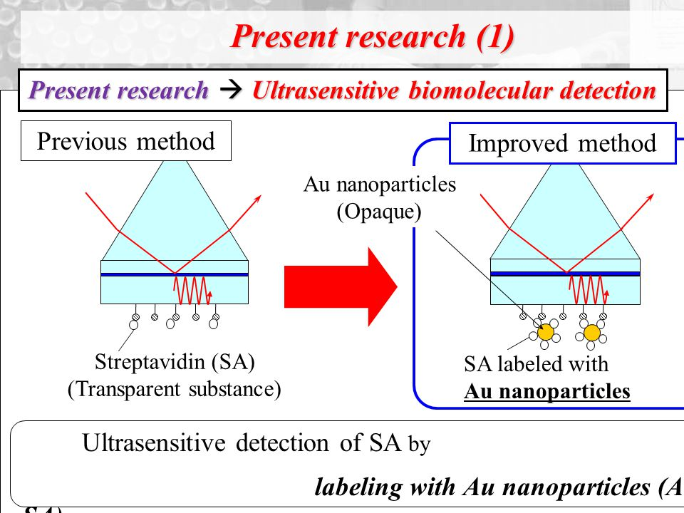 Present research (1) Streptavidin (SA) (Transparent substance) SA labeled with Au nanoparticles Ultrasensitive detection of SA by labeling with Au nanoparticles (Au- SA).
