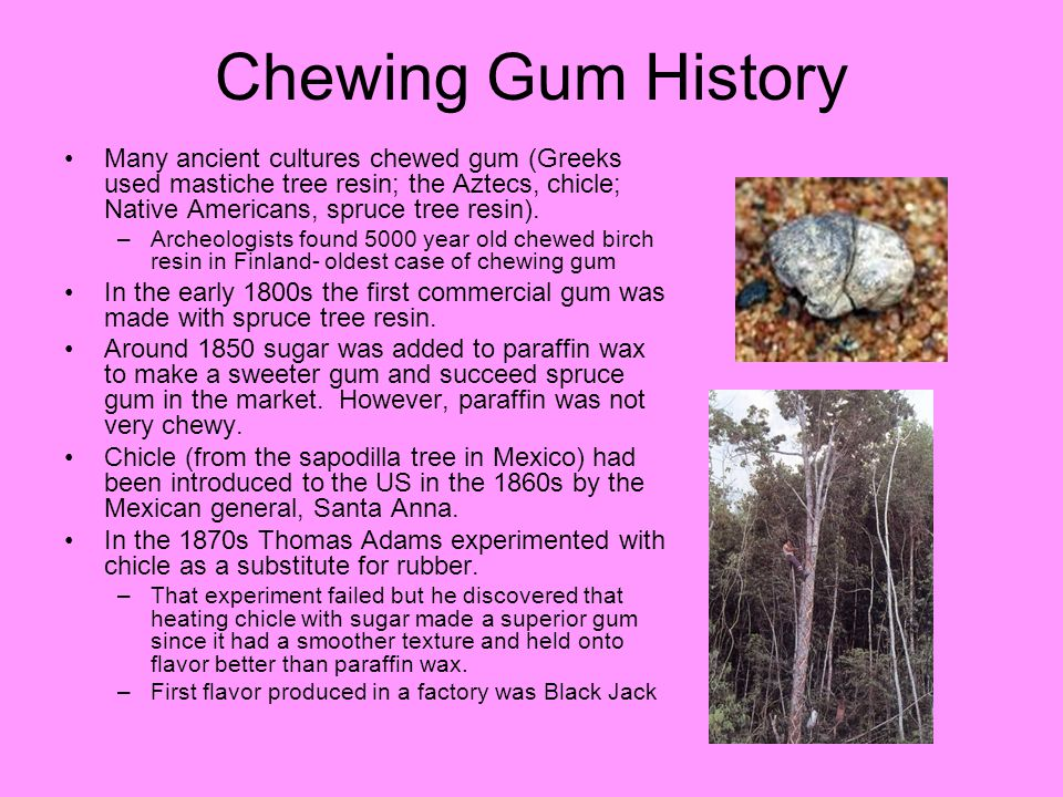Chewing Gum History Many ancient cultures chewed gum (Greeks used mastiche tree resin; the Aztecs, chicle; Native Americans, spruce tree resin).