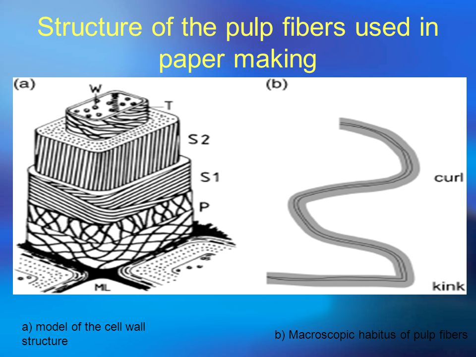 Structure of the pulp fibers used in paper making a) model of the cell wall structure b) Macroscopic habitus of pulp fibers
