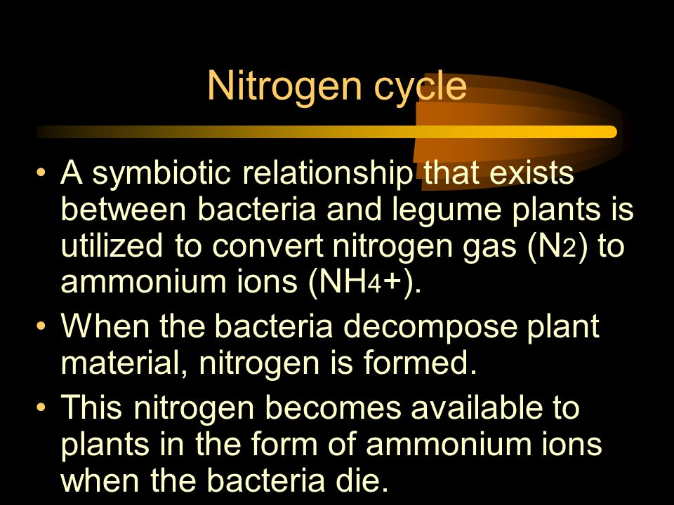 Nitrogen cycle A symbiotic relationship that exists between bacteria and legume plants is utilized to convert nitrogen gas (N 2 ) to ammonium ions (NH