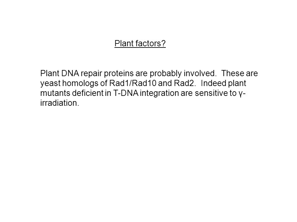 Plant factors. Plant DNA repair proteins are probably involved.