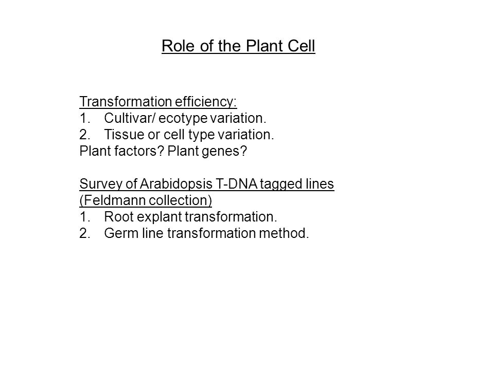 Role of the Plant Cell Transformation efficiency: 1.Cultivar/ ecotype variation.