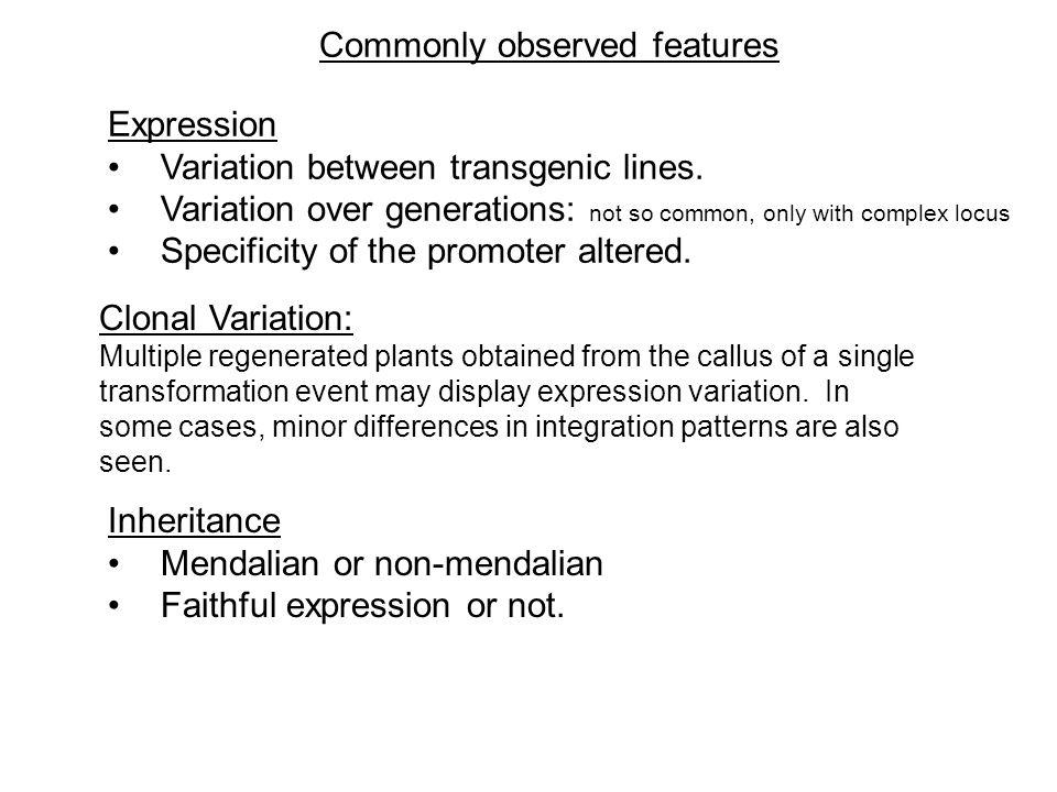 transgene Ideal transgenic locus * * *** * Commonly found transgenic locus * DNA methylation