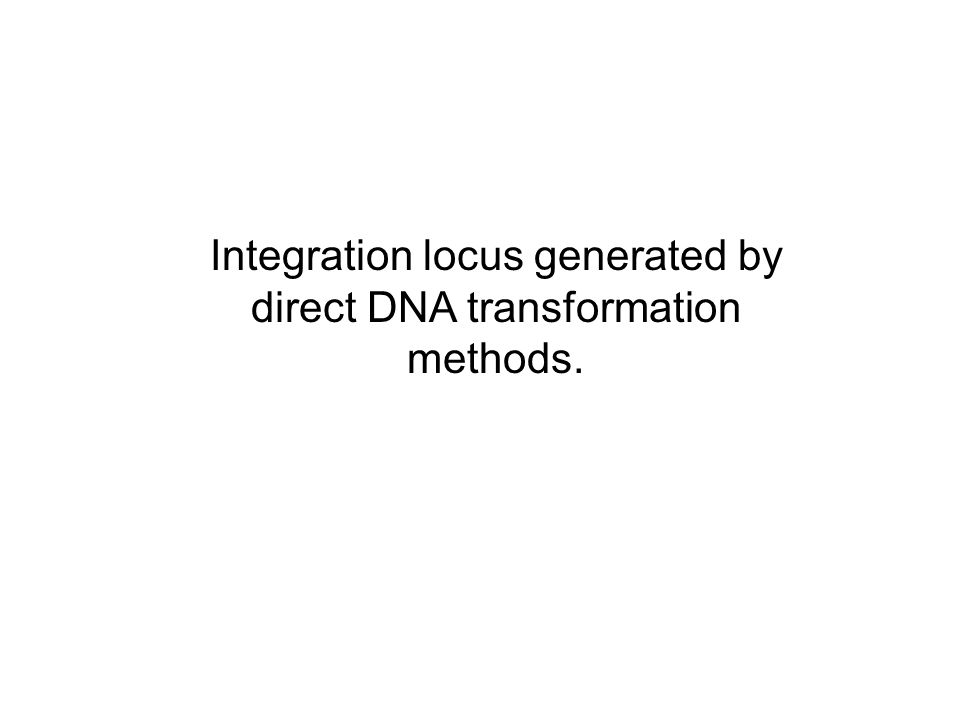 Integration locus generated by direct DNA transformation methods.