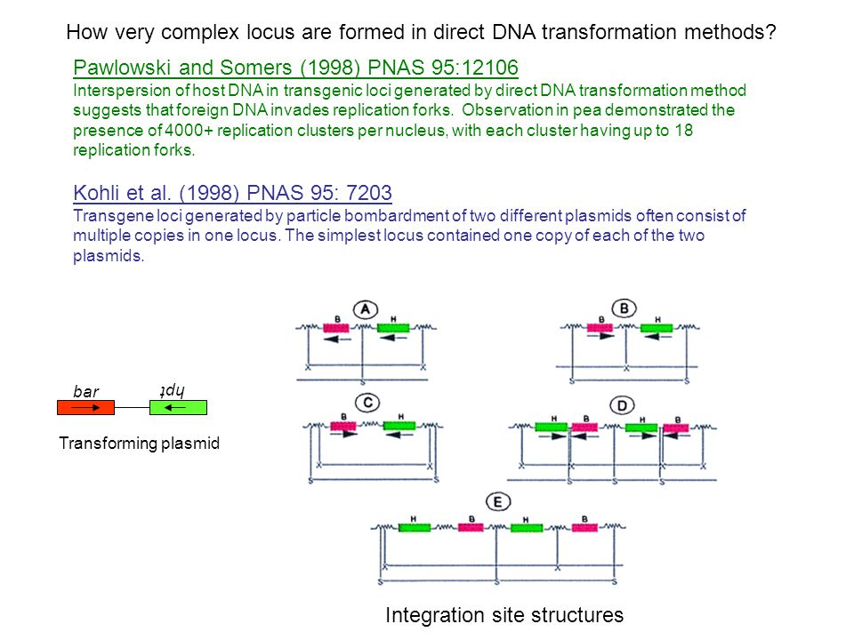 Pawlowski and Somers (1998) PNAS 95:12106 Interspersion of host DNA in transgenic loci generated by direct DNA transformation method suggests that foreign DNA invades replication forks.