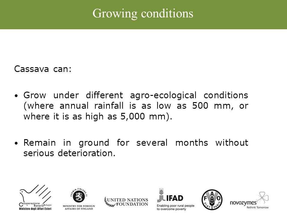Growing conditions Cassava can: Grow under different agro-ecological conditions (where annual rainfall is as low as 500 mm, or where it is as high as 5,000 mm).