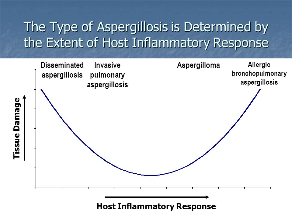 The Type of Aspergillosis is Determined by the Extent of Host Inflammatory Response Host Inflammatory Response Tissue Damage Allergic bronchopulmonary aspergillosis AspergillomaInvasive pulmonary aspergillosis Disseminated aspergillosis