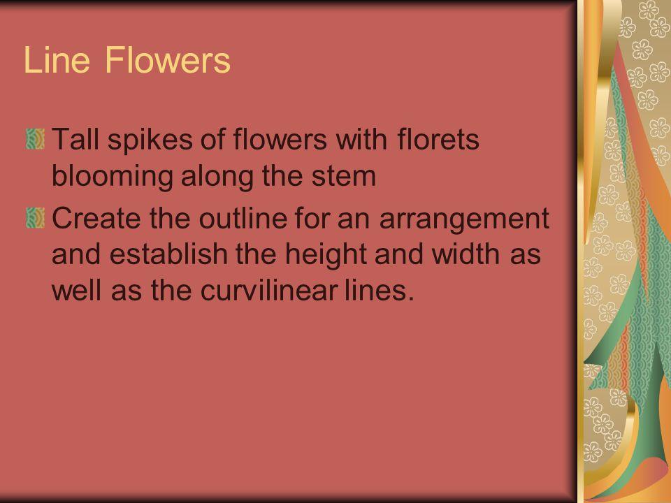 Line Flowers-Examples Snapdragons Gladiolus