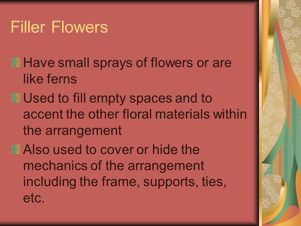 Hyacinthus orientalis cv. – Hyacinth