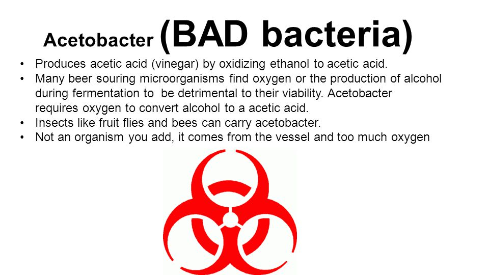 Acetobacter (BAD bacteria) Produces acetic acid (vinegar) by oxidizing ethanol to acetic acid.