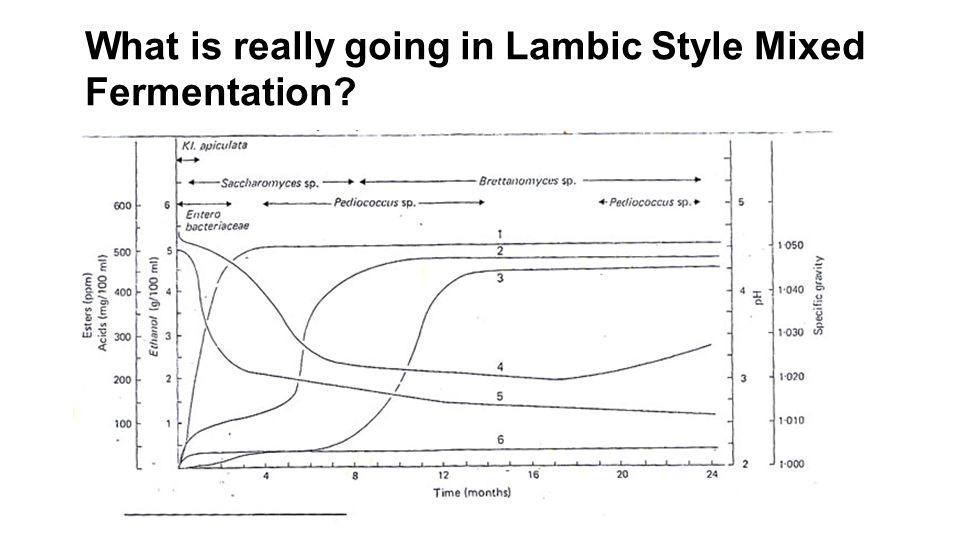 What is really going in Lambic Style Mixed Fermentation