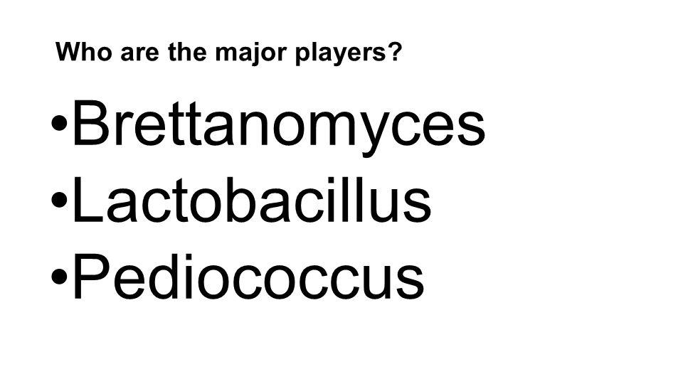 Who are the major players Brettanomyces Lactobacillus Pediococcus