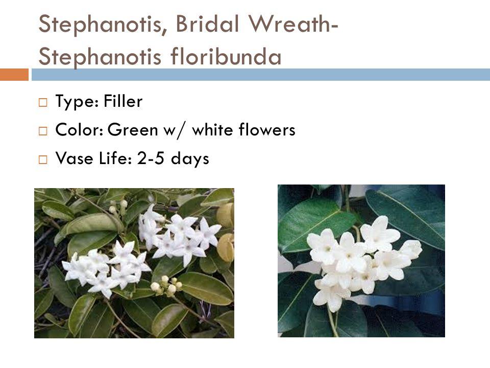 Stephanotis, Bridal Wreath- Stephanotis floribunda  Type: Filler  Color: Green w/ white flowers  Vase Life: 2-5 days