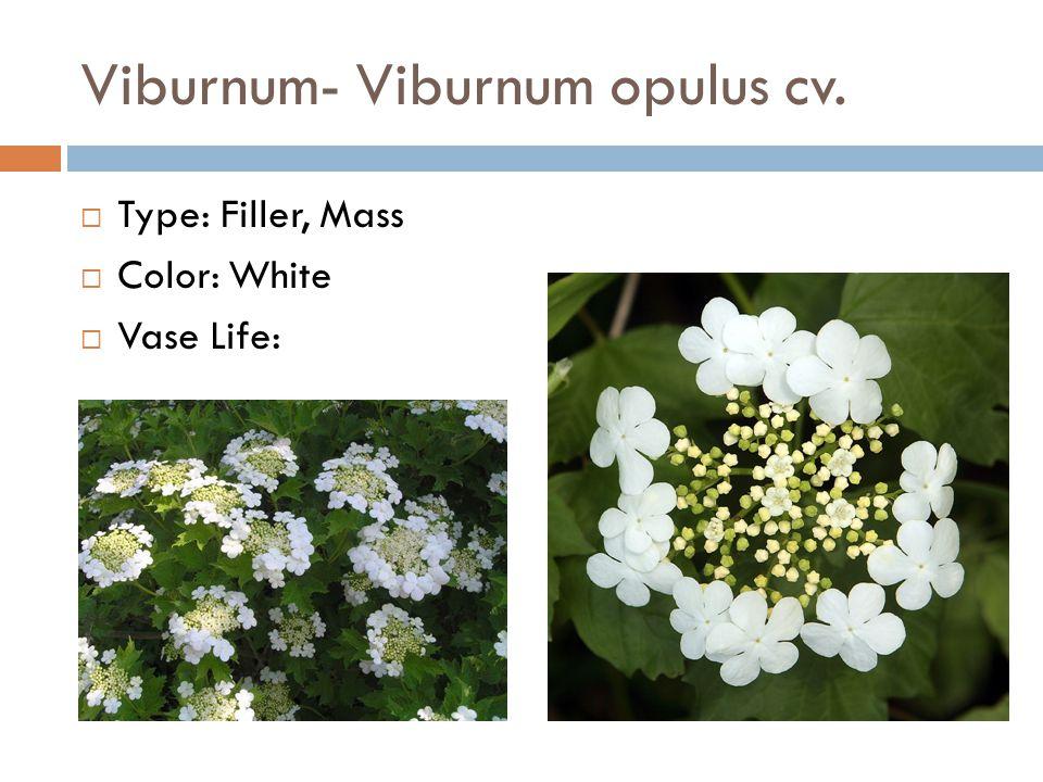 Viburnum- Viburnum opulus cv.  Type: Filler, Mass  Color: White  Vase Life: