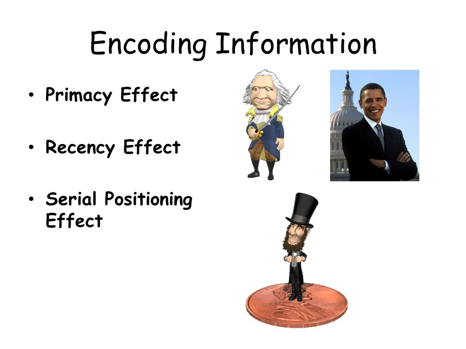 Encoding Information Primacy Effect Recency Effect Serial Positioning Effect