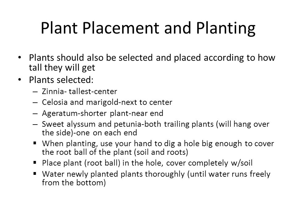 Plant Placement and Planting Plants should also be selected and placed according to how tall they will get Plants selected: – Zinnia- tallest-center – Celosia and marigold-next to center – Ageratum-shorter plant-near end – Sweet alyssum and petunia-both trailing plants (will hang over the side)-one on each end  When planting, use your hand to dig a hole big enough to cover the root ball of the plant (soil and roots)  Place plant (root ball) in the hole, cover completely w/soil  Water newly planted plants thoroughly (until water runs freely from the bottom)