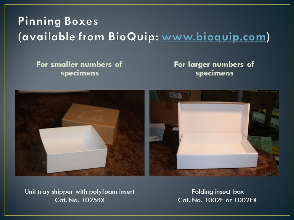 For smaller numbers of specimens For larger numbers of specimens Folding insect box Cat. No. 1002F or 1002FX Unit tray shipper with polyfoam insert Ca