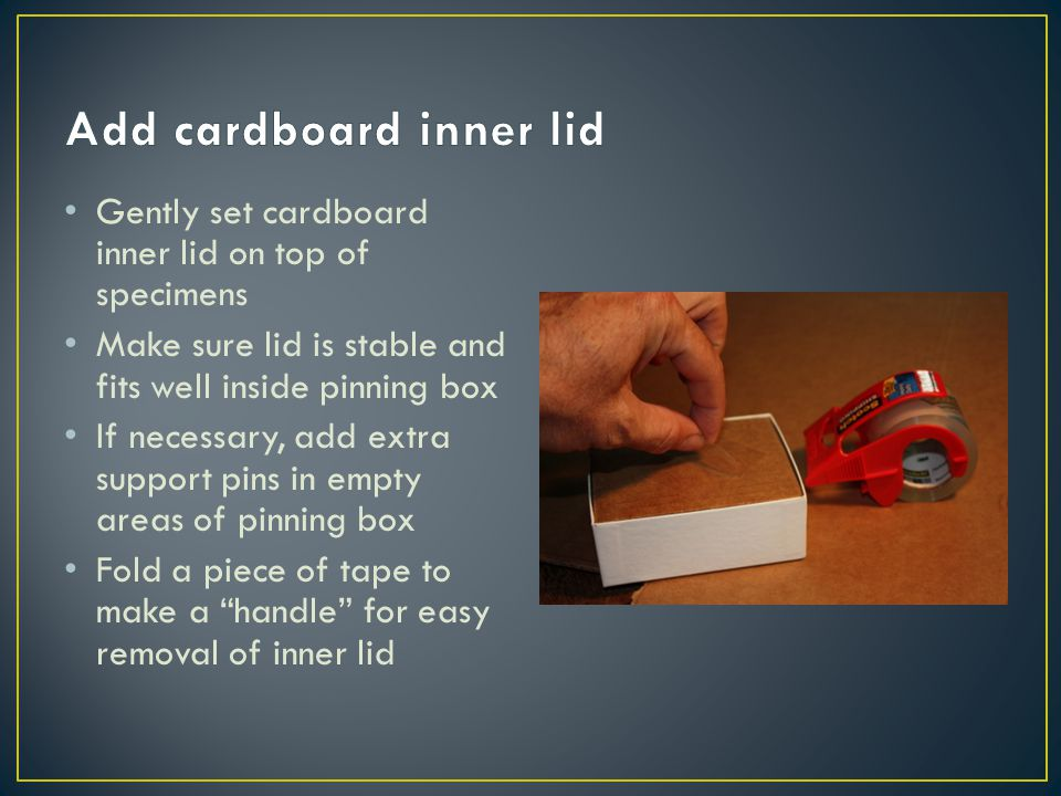 Gently set cardboard inner lid on top of specimens Make sure lid is stable and fits well inside pinning box If necessary, add extra support pins in empty areas of pinning box Fold a piece of tape to make a handle for easy removal of inner lid