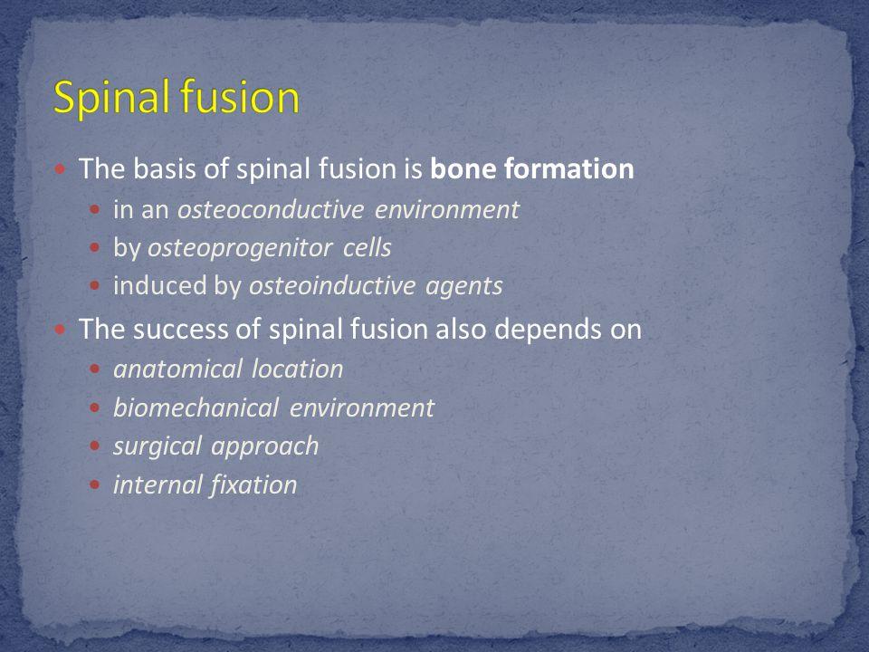 Hip Bone: o Made of three bones fused in a Y-shaped fashion