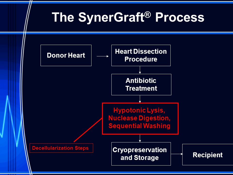 Donor Heart Heart Dissection Procedure Antibiotic Treatment Hypotonic Lysis, Nuclease Digestion, Sequential Washing Cryopreservation and Storage Recipient Decellularization Steps The SynerGraft ® Process