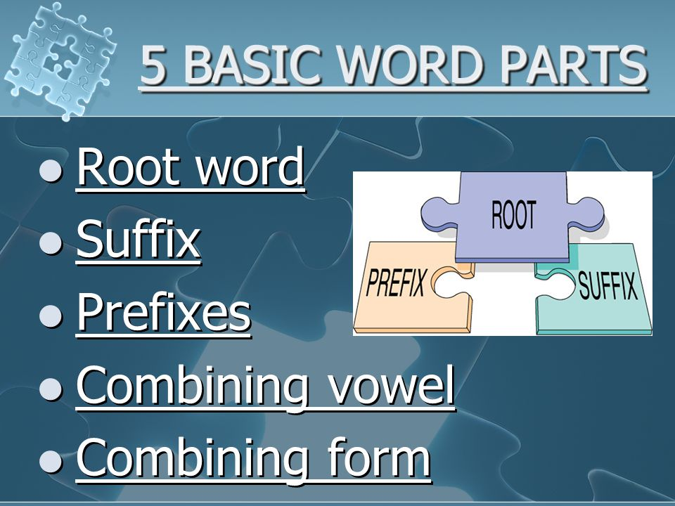 ROOT WORD Root Word – foundation of the word, usually indicates the involved body part Examples: cardi -  cephal – gastr – cyt – A medical term can have one or more root words.