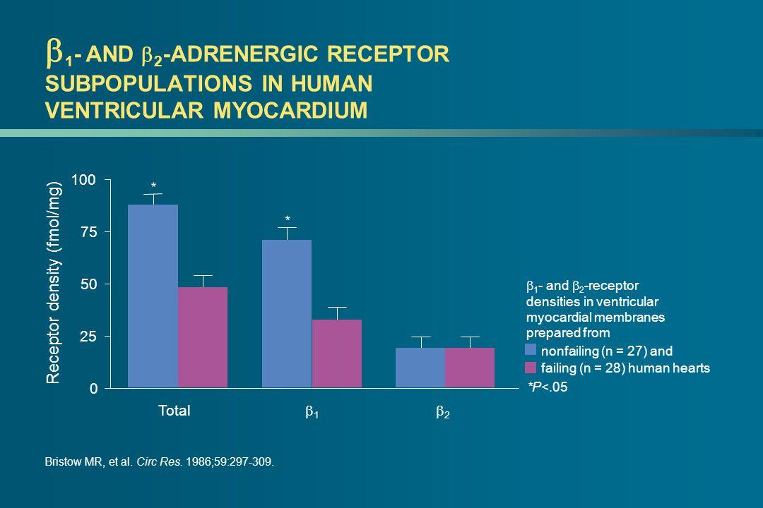  1 - AND  2 -ADRENERGIC RECEPTOR SUBPOPULATIONS IN HUMAN VENTRICULAR MYOCARDIUM Bristow MR, et al.