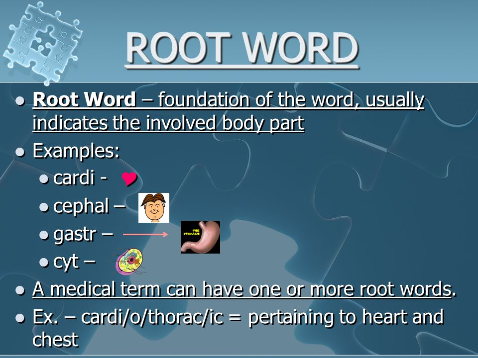 ROOT WORD Root Word – foundation of the word, usually indicates the involved body part Examples: cardi -  cephal – gastr – cyt – A medical term can have one or more root words.