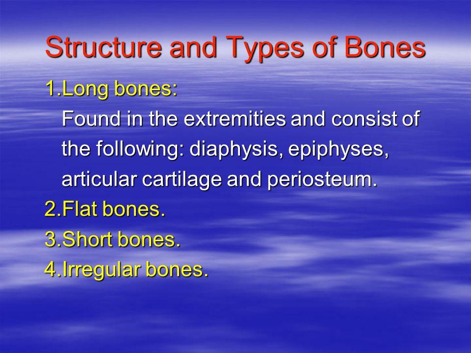 Divisions of Skeletal System 1.Axial skeleton: Bones of skull, thorax and vertebral column.