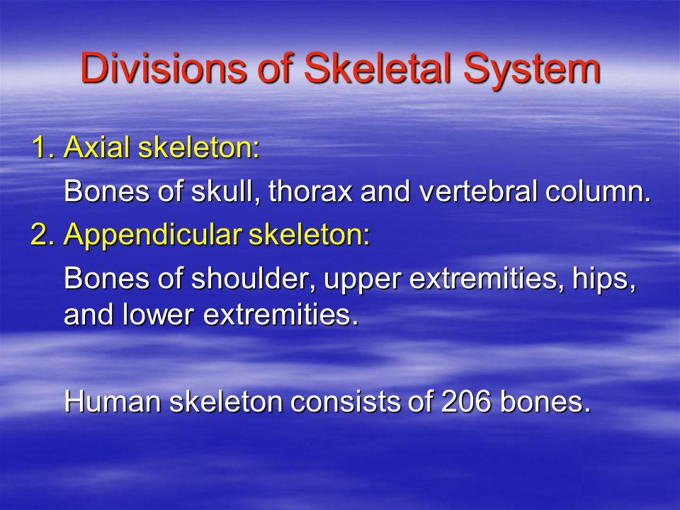 Divisions of Skeletal System 1. Axial skeleton: Bones of skull, thorax and vertebral column.