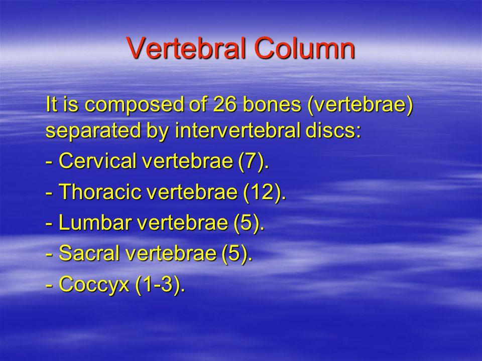 WR and CF related to Musculoskeletal System (Lower Extremities) ExampleMeaningWR/CF pelv/itherm lumb/o/dynia ili/o/femor/al ischi/o/rect/als pub/o/vesic/al femer/o/tibi/al patell/a/pexy calcane/o/dynia Ped/i/algia pelvic bone loinsiliumischium pubis anterior femurpatellacalcaneumfootpelv/ilumb/oili/oischi/opub/ofemor/opatell/ocalcane/o ped/i or pod/o