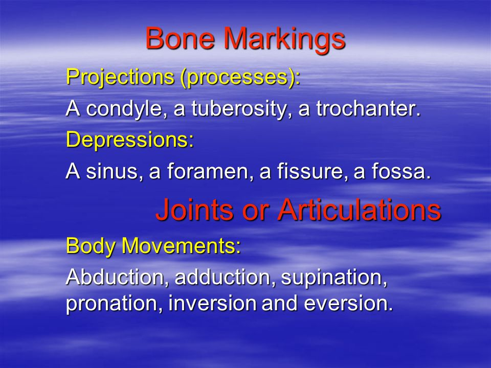 Bone Markings Projections (processes): A condyle, a tuberosity, a trochanter.