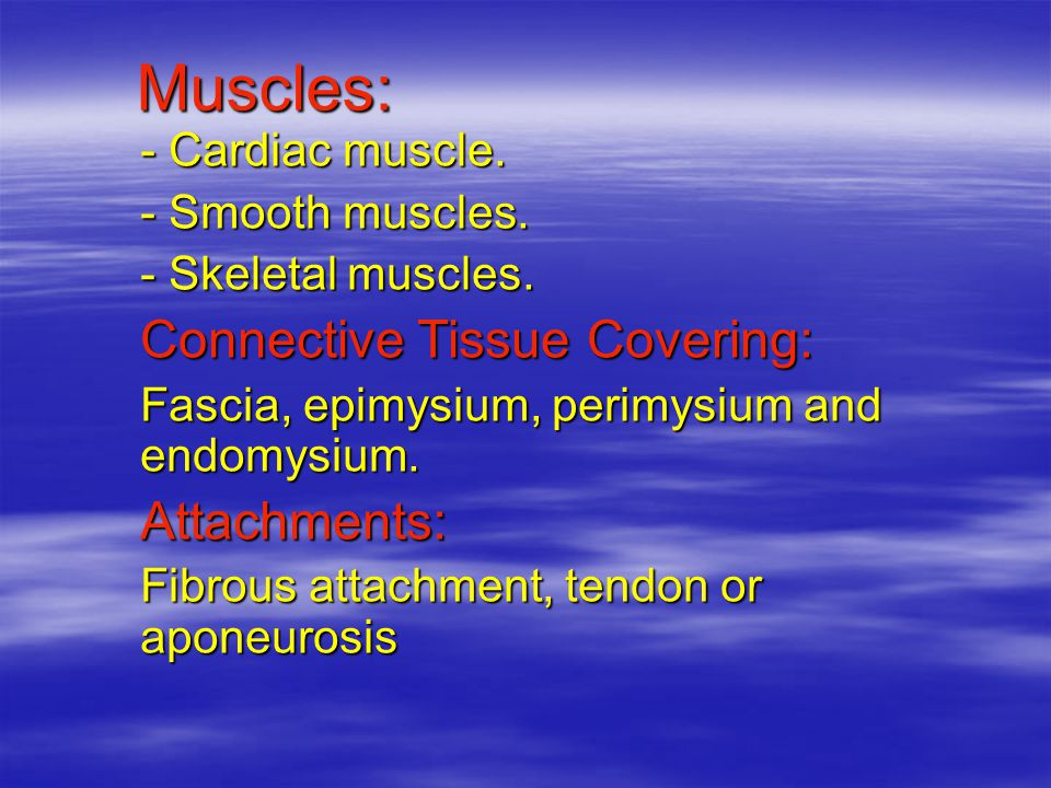 Muscles: Muscles: - Cardiac muscle. - Smooth muscles.