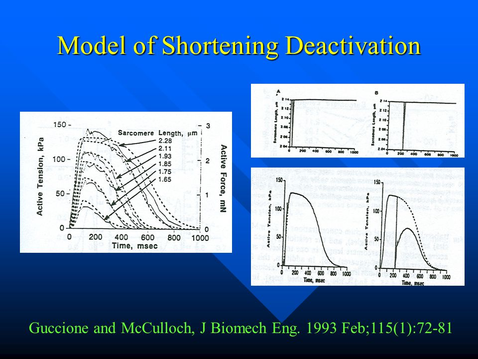 Model of Shortening Deactivation Guccione and McCulloch, J Biomech Eng. 1993 Feb;115(1):72-81