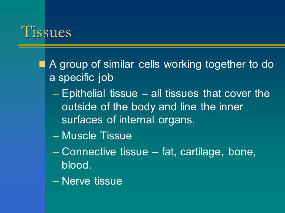 Types of Cells (p. 36) Muscle cellNerve cell Epithelial cellFat cell