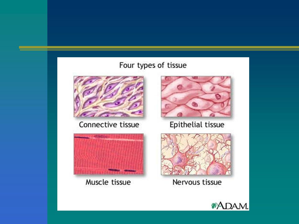 Tissues A group of similar cells working together to do a specific job –Epithelial tissue – all tissues that cover the outside of the body and line th