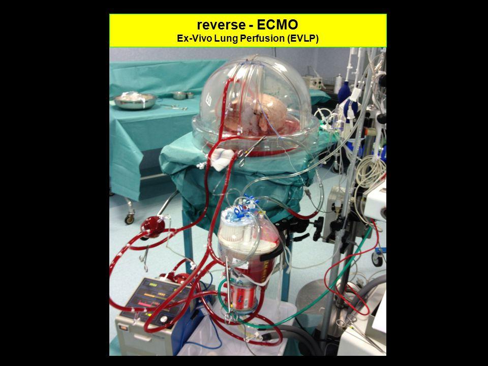 reverse - ECMO Ex-Vivo Lung Perfusion (EVLP)