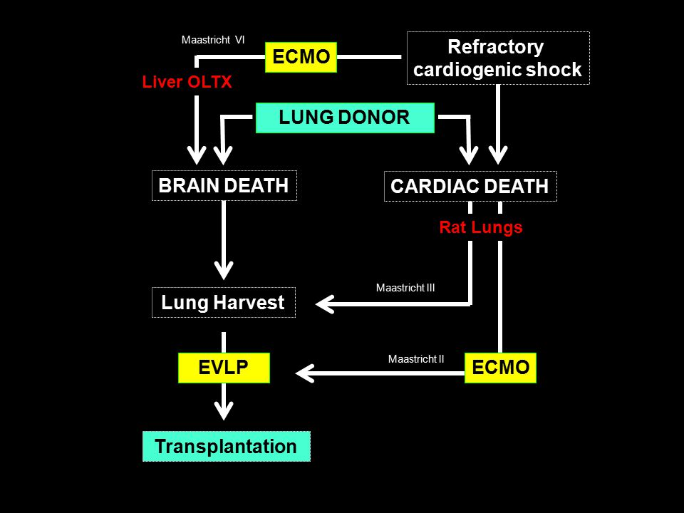 Lung Harvest Transplantation BRAIN DEATH Maastricht III CARDIAC DEATH EVLP Maastricht II ECMO Refractory cardiogenic shock ECMO Maastricht VI Liver OLTX Rat Lungs