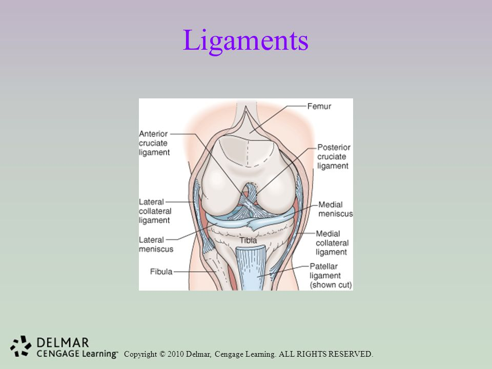 Copyright © 2010 Delmar, Cengage Learning. ALL RIGHTS RESERVED. Ligaments
