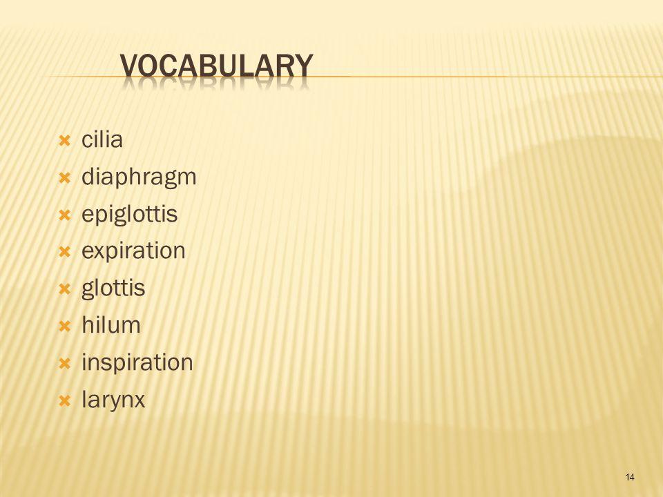 14  cilia  diaphragm  epiglottis  expiration  glottis  hilum  inspiration  larynx