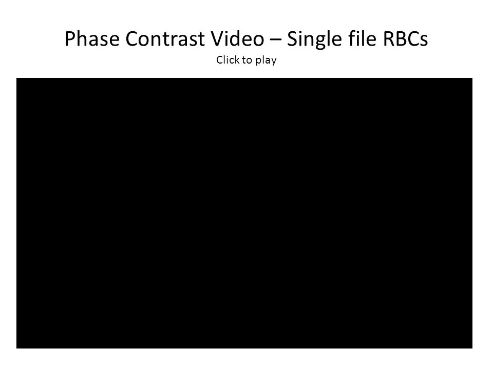 Phase Contrast Video – Single file RBCs Click to play