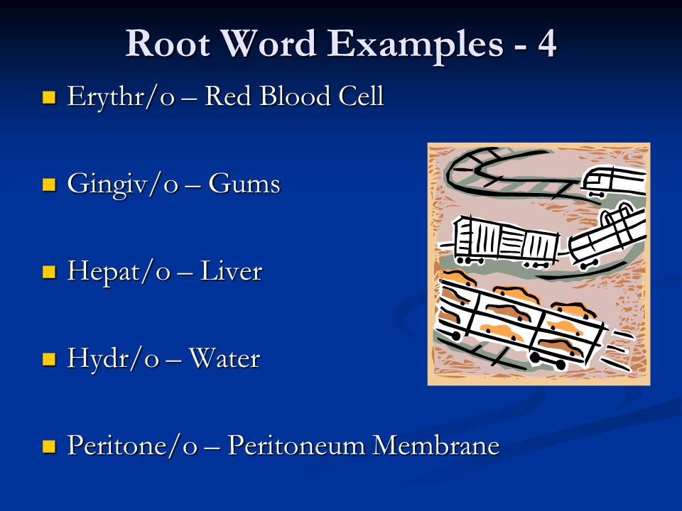 Root Word Examples - 4 Erythr/o – Red Blood Cell Erythr/o – Red Blood Cell Gingiv/o – Gums Gingiv/o – Gums Hepat/o – Liver Hepat/o – Liver Hydr/o – Wa