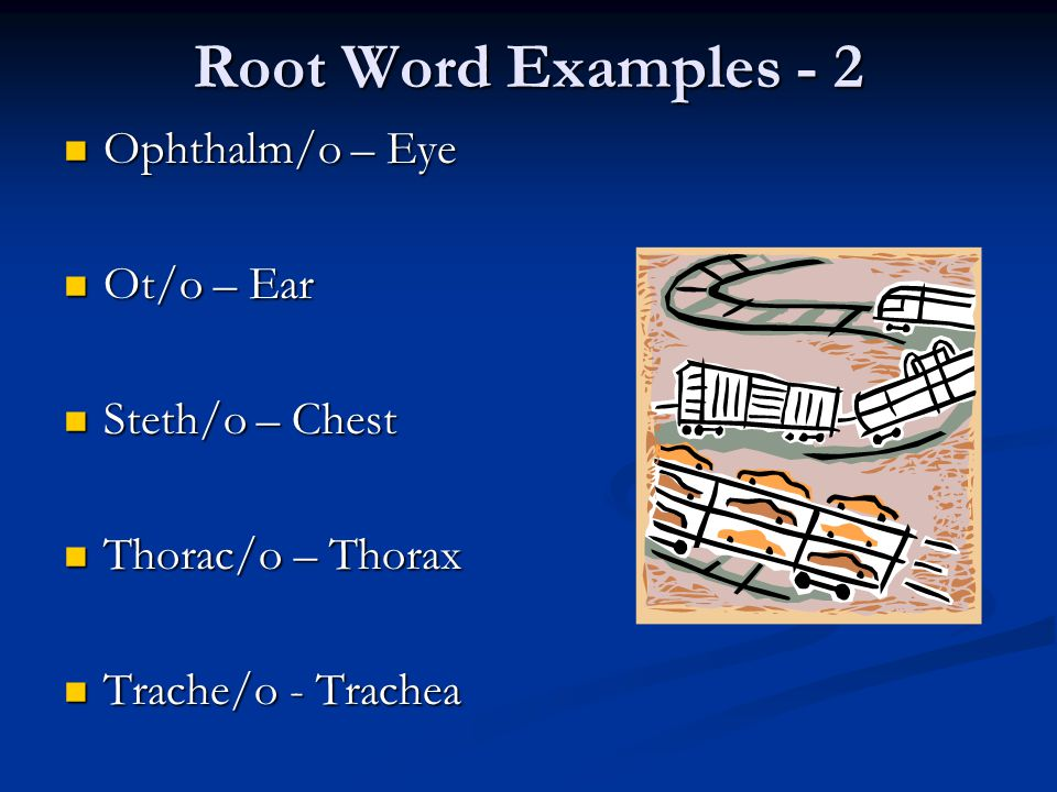 Root Word Examples - 2 Ophthalm/o – Eye Ophthalm/o – Eye Ot/o – Ear Ot/o – Ear Steth/o – Chest Steth/o – Chest Thorac/o – Thorax Thorac/o – Thorax Trache/o - Trachea Trache/o - Trachea