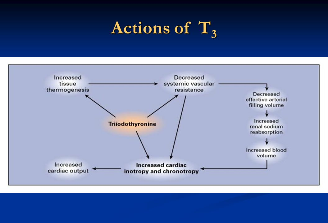 Actions of T 3