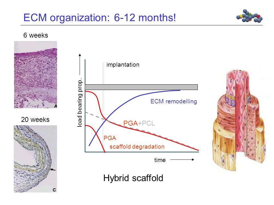 ECM organization: 6-12 months.