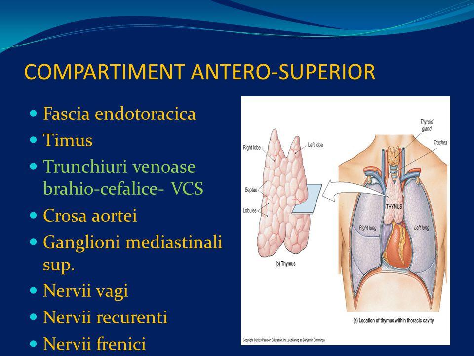 COMPARTIMENT ANTERO-SUPERIOR Fascia endotoracica Timus Trunchiuri venoase brahio-cefalice- VCS Crosa aortei Ganglioni mediastinali sup.
